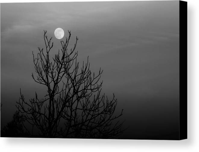 Moon Canvas Print featuring the photograph Cradled Moon by Nathaniel Kidd