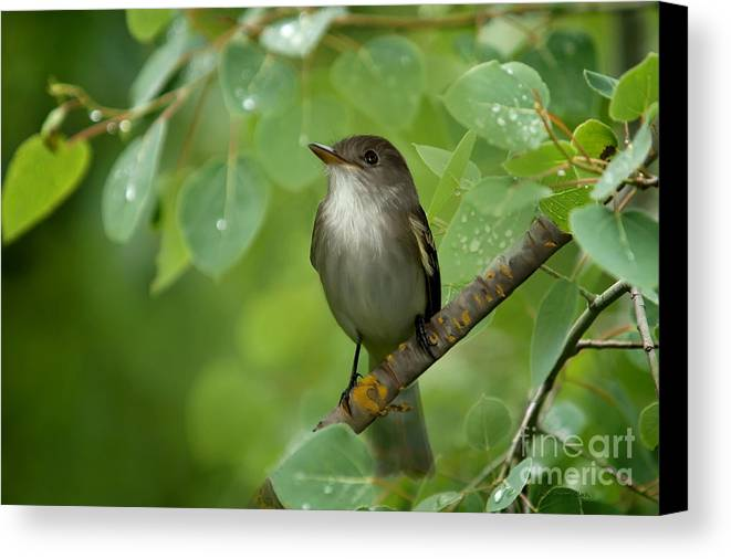 Day Dreamer Canvas Print featuring the photograph Day Dreamer by Beve Brown-Clark Photography