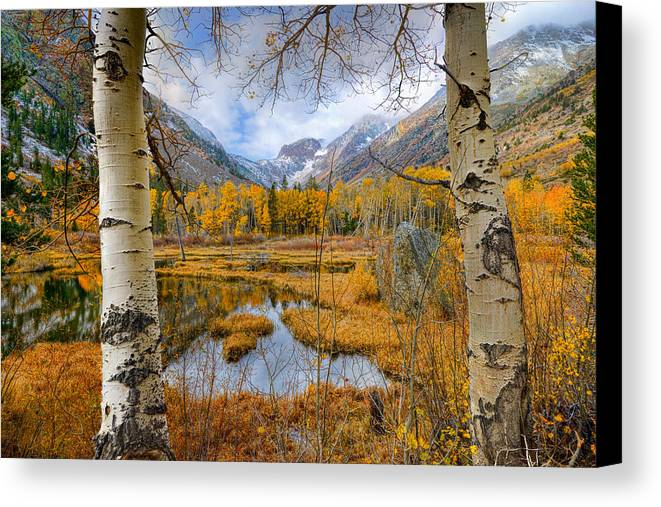 Mark Whitt Canvas Print featuring the photograph Dazzling Fall Foliage by Mark Whitt