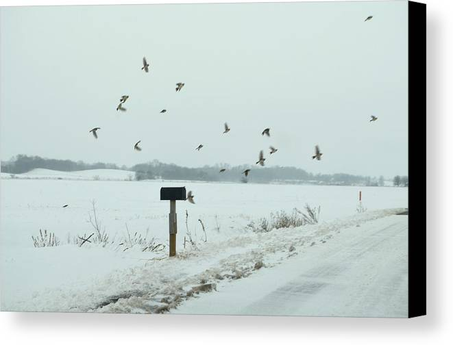 Winter Canvas Print featuring the photograph Disturbing The Winter Foragers by Julie Dant