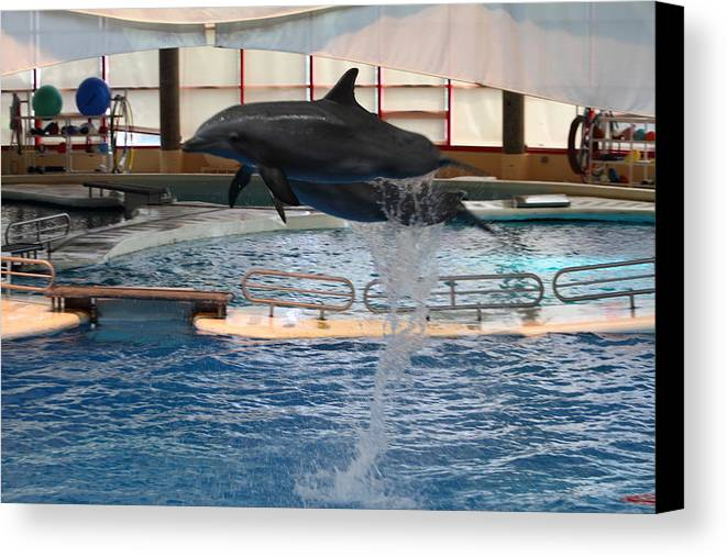 Inner Canvas Print featuring the photograph Dolphin Show - National Aquarium In Baltimore Md - 1212249 by DC Photographer