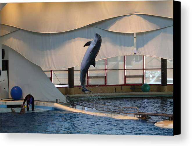 Inner Canvas Print featuring the photograph Dolphin Show - National Aquarium In Baltimore Md - 121255 by DC Photographer