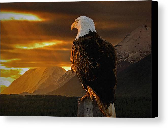 Eagle Canvas Print featuring the photograph Domain by Ron Day