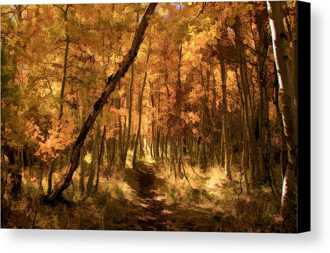 June Lake Canvas Print featuring the photograph Down The Golden Path by Donna Kennedy