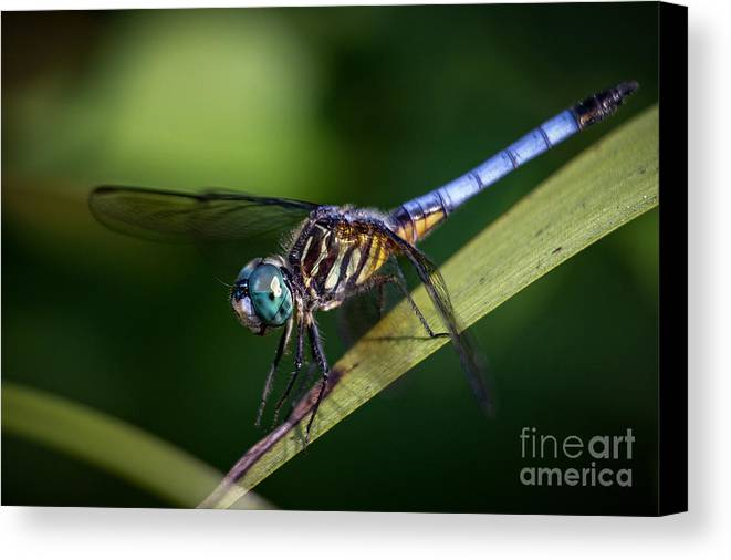 Dragonfly Canvas Print featuring the photograph Dragonfly In The Wind by Deborah Scannell
