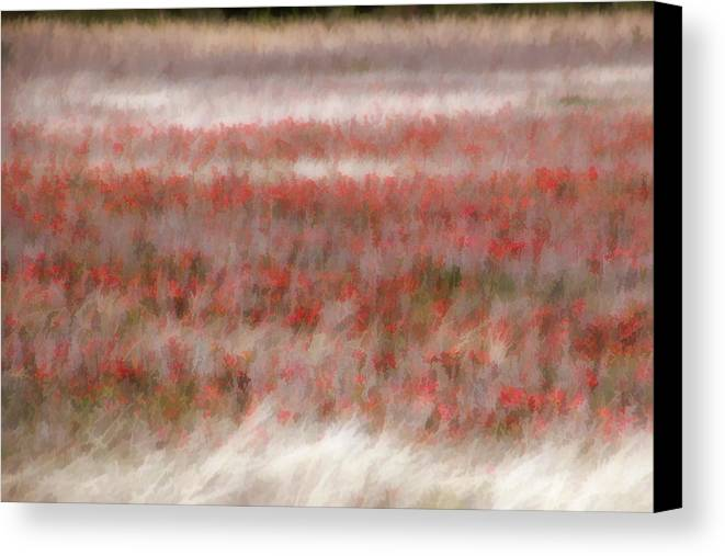 Wildflowers Canvas Print featuring the photograph Dreamy Wildflowers by Carolyn Fletcher