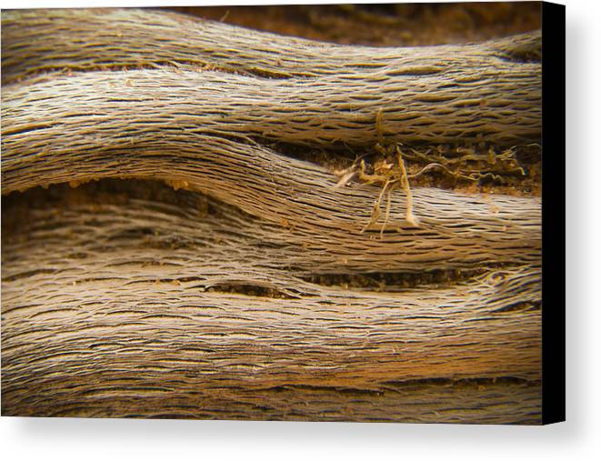 3scape Photos Canvas Print featuring the photograph Driftwood 1 by Adam Romanowicz