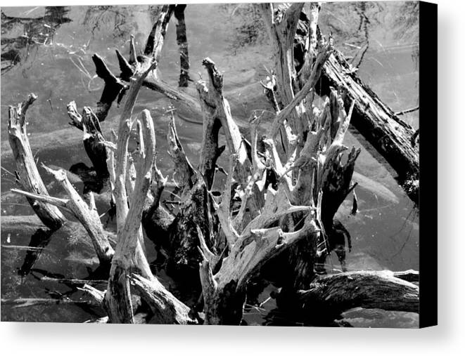 Reflection Canvas Print featuring the photograph Driftwood On Lost Lake by Michelle Calkins