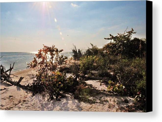 Beach Canvas Print featuring the photograph Drops Of Sunshine by Kicking Bear Productions