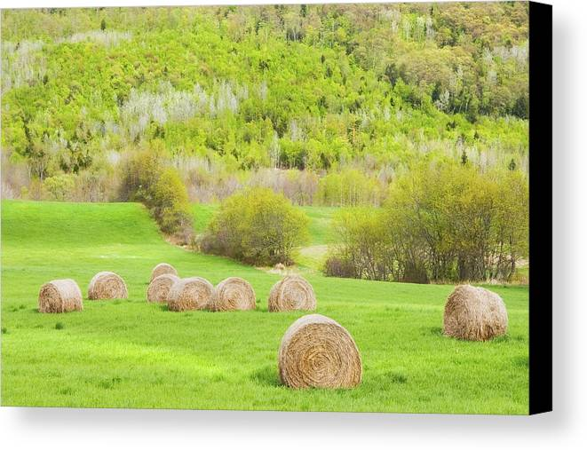 Agriculture Canvas Print featuring the photograph Dry Hay Bales In Spring Farm Field Maine by Keith Webber Jr