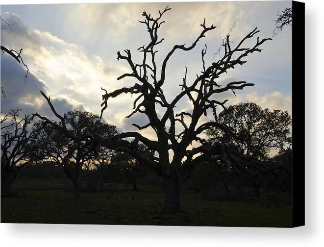 Canvas Print featuring the photograph Dying Sunset by Gerald Andersen