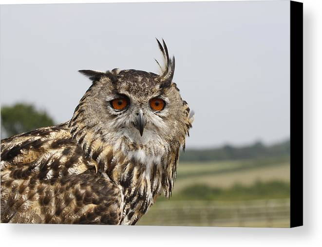 Eagle Canvas Print featuring the photograph Eagle Owl by Simon Gregory
