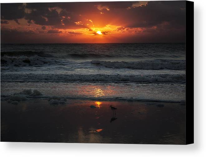 Early Bird Canvas Print featuring the photograph Early Bird by Island Sunrise and Sunsets Pieter Jordaan