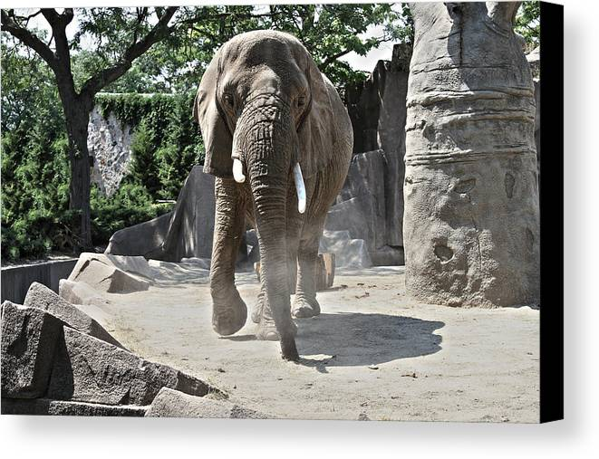 Elephant Canvas Print featuring the photograph Elephant by Airestudios Photography