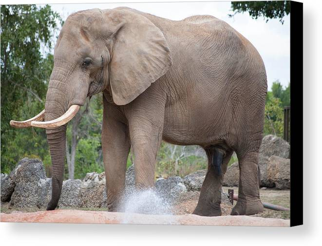 Elephant Canvas Print featuring the photograph Elephant by Mitchell Rudin