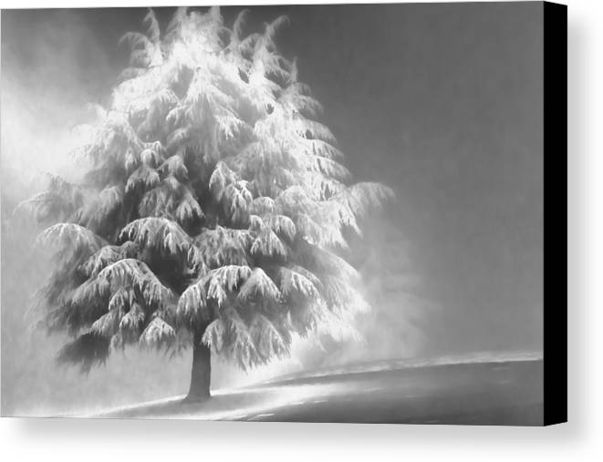 Beauty Canvas Print featuring the photograph Enlightened Tree by Don Schwartz