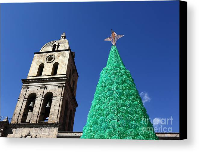 Christmas Canvas Print featuring the photograph Environmentally Friendly Christmas Tree by James Brunker