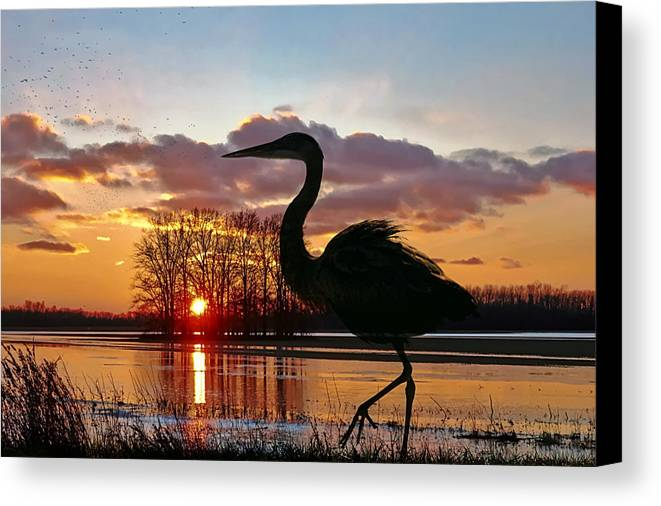 Heron Canvas Print featuring the photograph Evening Stroll by Randall Wilkerson