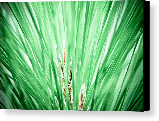 Canvas Print featuring the photograph Everglades 10 by Becky Anders