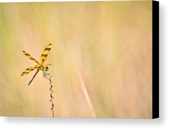 Canvas Print featuring the photograph Everglades 14 by Becky Anders