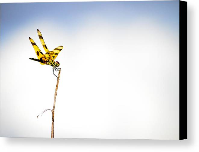 Canvas Print featuring the photograph Everglades 15 by Becky Anders
