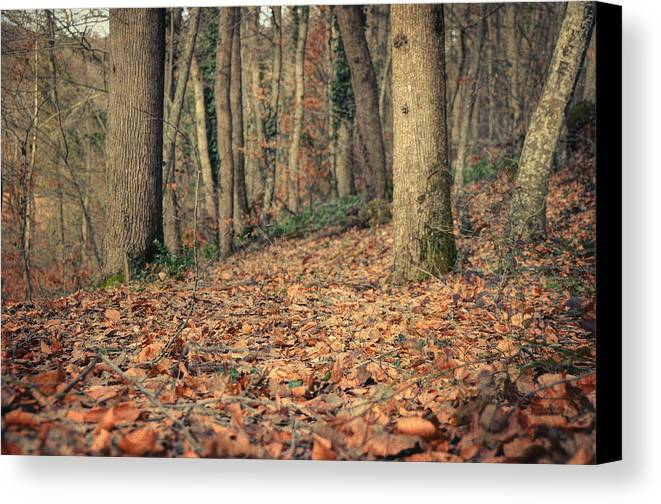 Woods Canvas Print featuring the photograph Expectation by Taylan Apukovska