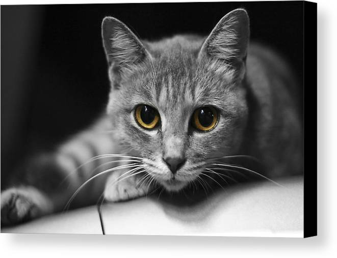 Cat Canvas Print featuring the photograph Eyes Open Wide by JianGang Wang