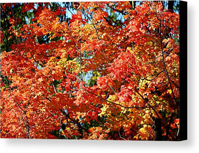 Metro Canvas Print featuring the photograph Fall Foliage Colors 22 by Metro DC Photography