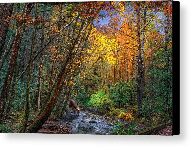 Solitude Canvas Print featuring the photograph Fall Solitude by Mary Almond