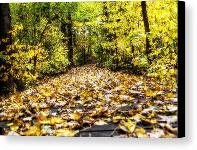 Todd Carter Fall Trail Tree Trees Leaves Leaf Yellow Orange Brown Green Black Deep Woods Wood Planks Ground Walk Walking Park Hdr Canvas Print featuring the photograph Fall Trail by Todd Carter