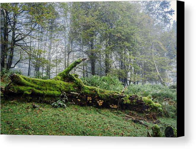 Autumn Canvas Print featuring the photograph Fallen Stump by Tilyo Rusev