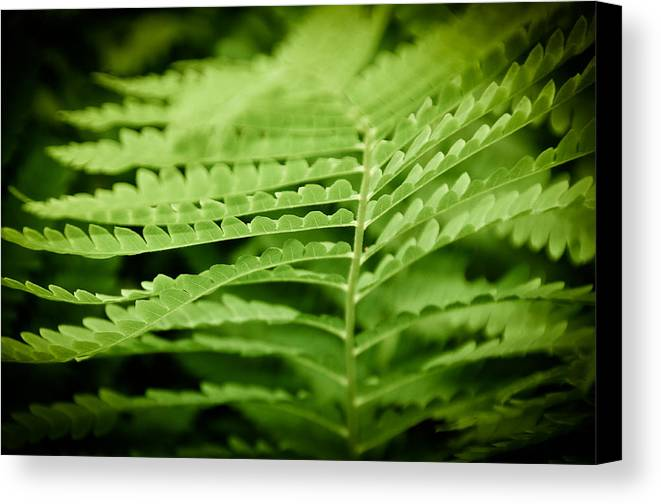 Green Canvas Print featuring the photograph Fern by Gabriel Lopez