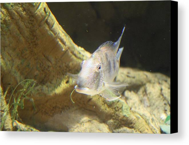 Inner Canvas Print featuring the photograph Fish - National Aquarium In Baltimore Md - 121248 by DC Photographer
