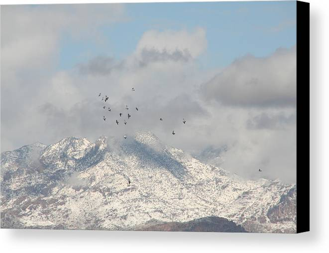 Tucson Canvas Print featuring the photograph Flock by David S Reynolds