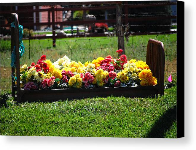 Flower Flowers Bed Iron Cast Dirt Colorful Grass Garden Fence Huntsville Utah Canvas Print featuring the photograph Flower Bed by Holly Blunkall
