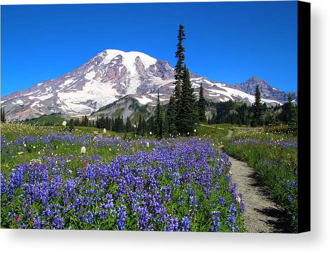 Wildflowers Canvas Print featuring the photograph Flowers On Mazama Ridge by Lynn Hopwood
