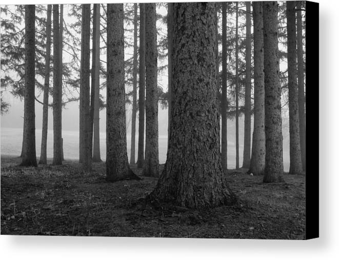 Fog Within The Pines Canvas Print featuring the photograph Fog Within The Pines Bw by Rachel Cohen