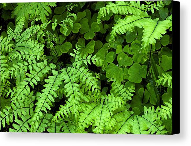 Leaves Canvas Print featuring the photograph Foliage At Springtime by Andrew Soundarajan