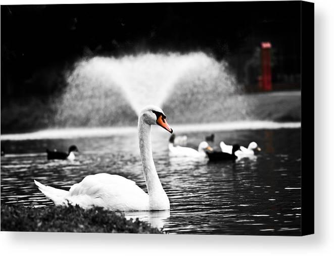 Swan Canvas Print featuring the photograph Fountain Swan by Shane Holsclaw