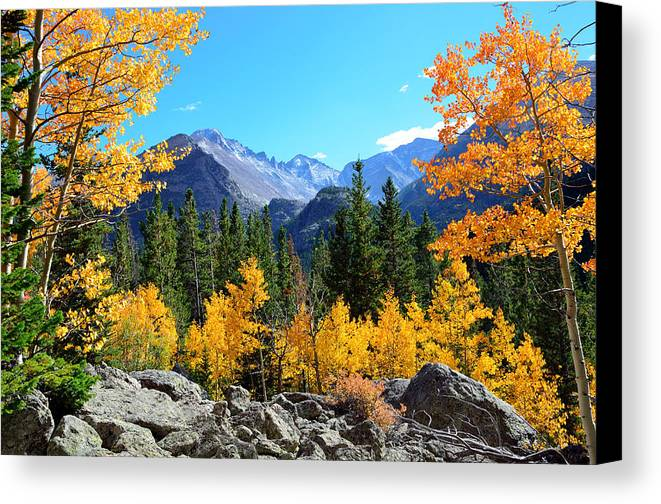 Bear Canvas Print featuring the photograph Framed In Gold by Tranquil Light Photography