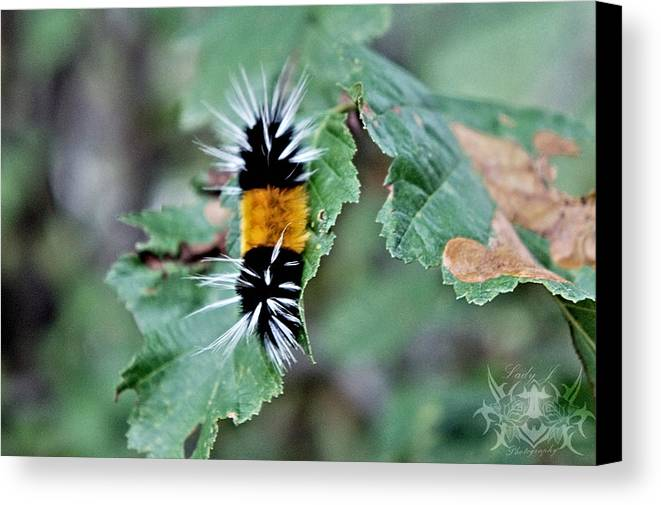 Caterpillar Canvas Print featuring the photograph Fuzzy Friend by Lady J Photography