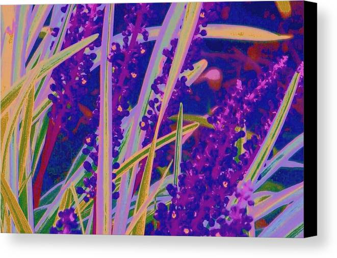 Canvas Print featuring the photograph Garden Grass by Shirley Moravec