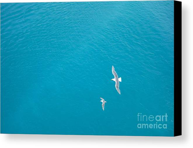 Birds Canvas Print featuring the photograph Gliding Seagulls by Jacqueline Athmann
