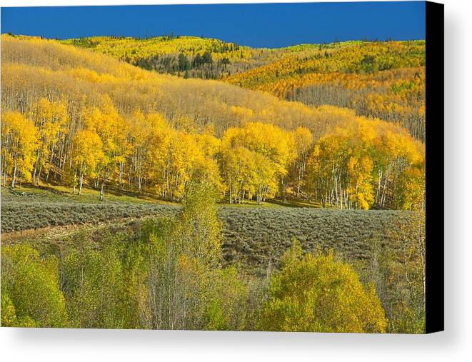 Landscape Canvas Print featuring the photograph Golden Sea by Steve Luther