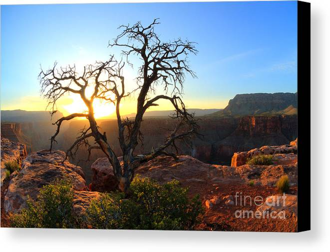 Grand Canyon Canvas Print featuring the photograph Grand Canyon Gathering The Light by Bob Christopher