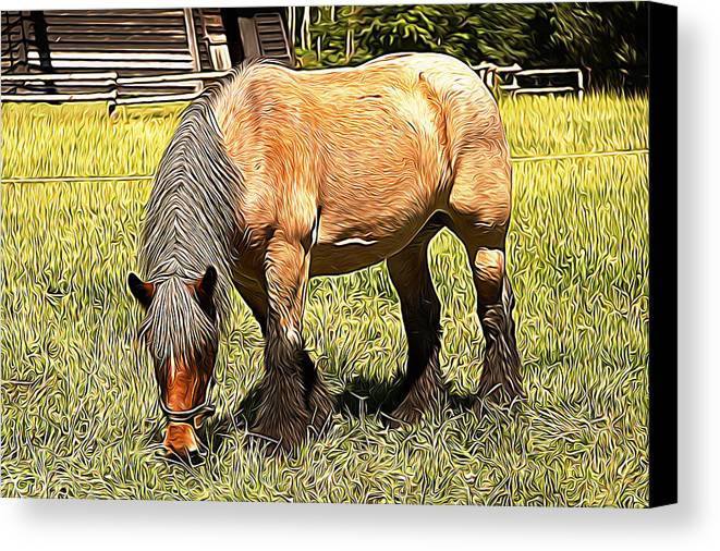 Horse Canvas Print featuring the painting Grazing by Studio Artist