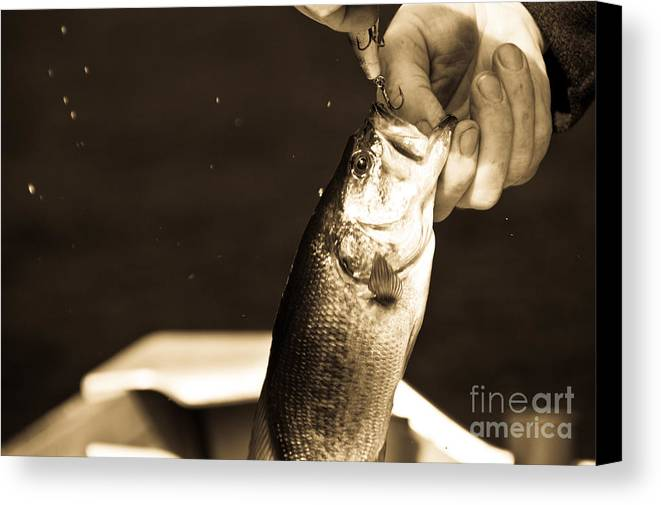 Fish Canvas Print featuring the photograph Great Catch by Cheryl Baxter