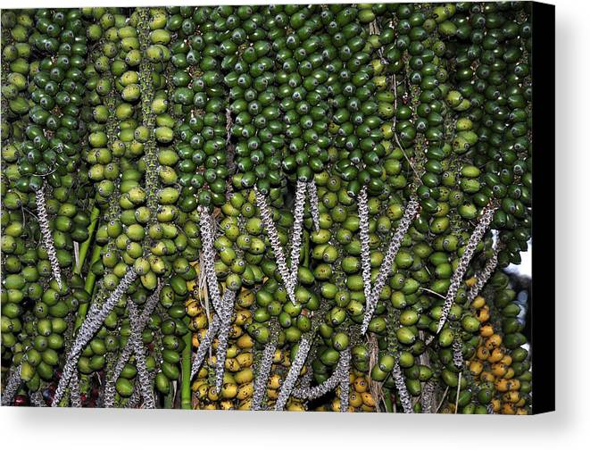 Fruits Canvas Print featuring the photograph Green by Henrique Souto