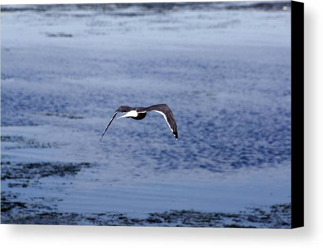 Birds Canvas Print featuring the photograph Gull Flying Over Water by Terry Thomas