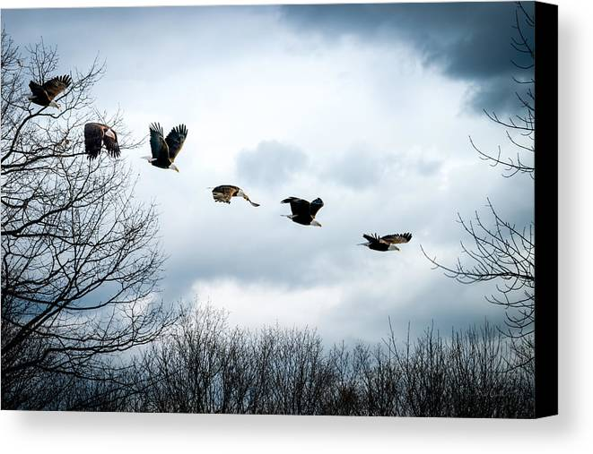 Eagle Canvas Print featuring the photograph Half Second Of Flight by Bob Orsillo
